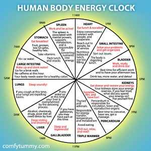 human-body-energy-clock